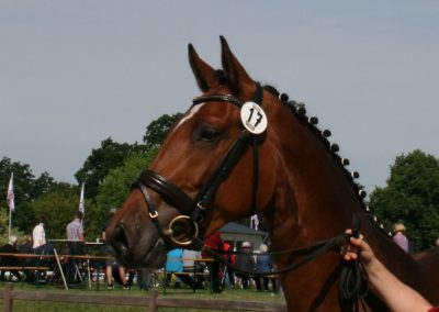 Reserve-Siegerin in Steinburg / Reserve Champion